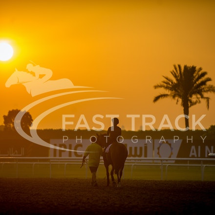 Dubai World Cup 2014 - Trackwork 28 March 2014