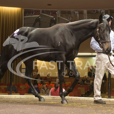 Lot 30, Barely A Moment x Bisbetica_27-04-14, Inglis Super Vobis_0007