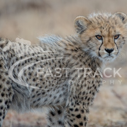 Nambiti Game Reserve - South Africa