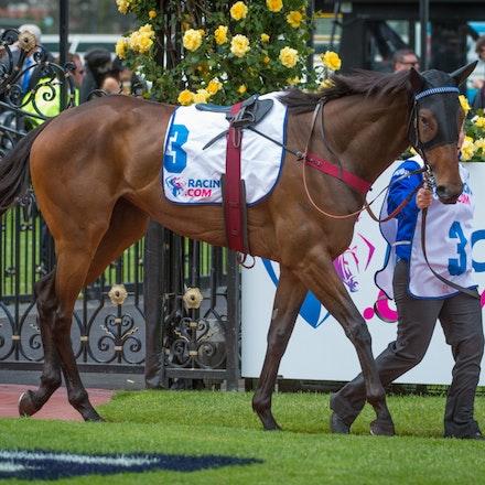 Race 2, Abduction_01-11-14, Group 2 Wakeful Stakes, Flemington_Sharon Chapman_0200