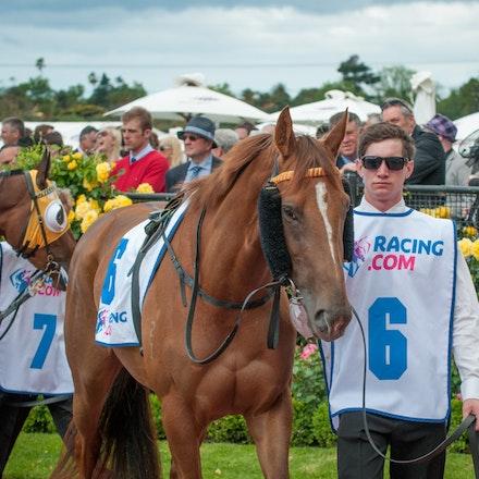 Race 2, Candelara_01-11-14, Group 2 Wakeful Stakes, Flemington_Michael McInally_0391