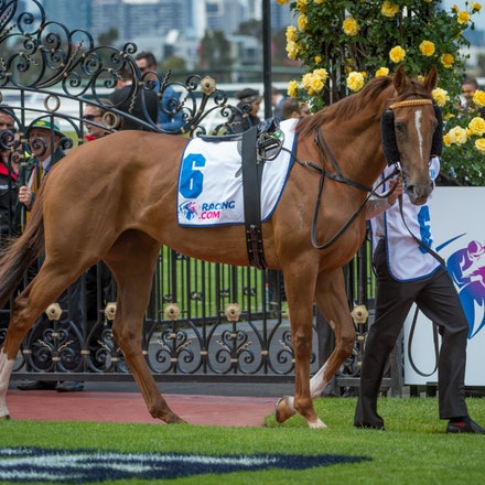 Race 2, Candelara_01-11-14, Group 2 Wakeful Stakes, Flemington_Sharon Chapman_0209