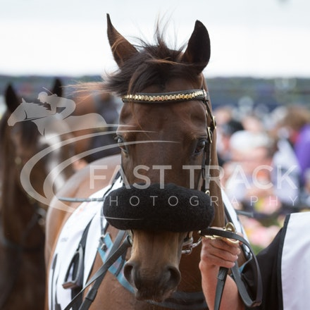 Race 3, Beauty Perception_04-11-14, Flemington_Sharon Chapman_980