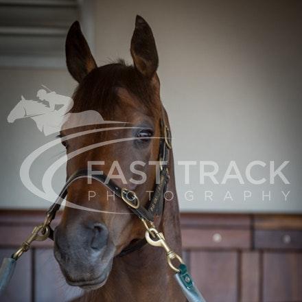 Race 3, Beauty Perception, Stalls_04-11-14, Flemington_Sharon Chapman_081