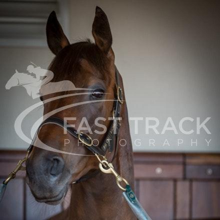 Race 3, Beauty Perception, Stalls_04-11-14, Flemington_Sharon Chapman_082