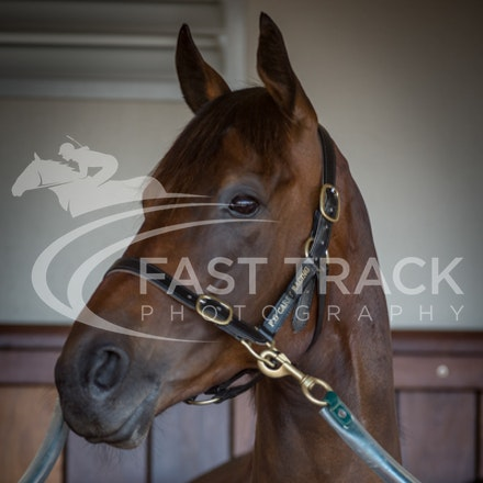 Race 3, Beauty Perception, Stalls_04-11-14, Flemington_Sharon Chapman_084