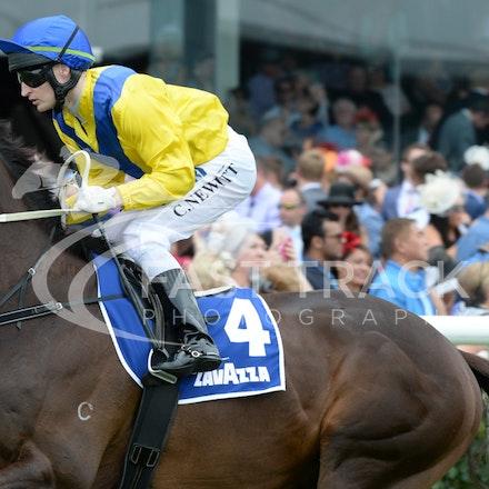 Race 4, Al Aneed, Craig Newitt_04-11-14, Flemington_Adam Mooshian_602