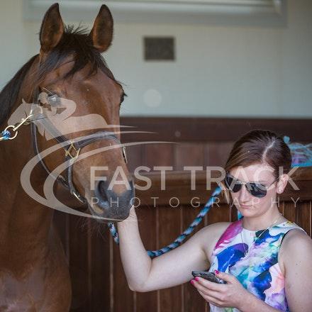 Race 4, Creance, Stalls_04-11-14, Flemington_Sharon Chapman_089