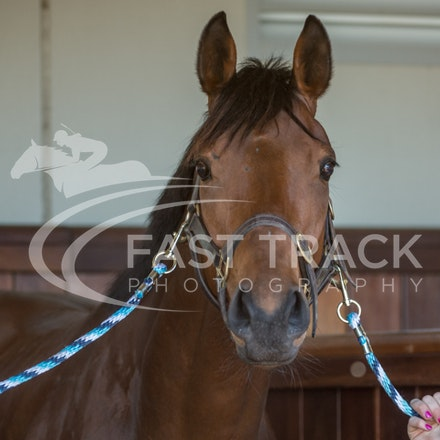 Race 4, Creance, Stalls_04-11-14, Flemington_Sharon Chapman_091