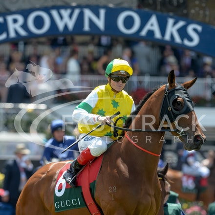 Race 3, Dual Star, Craig Williams_06-11-14, Flemington, Adam Mooshian_774