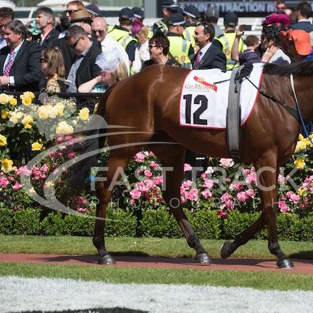 Race 6, Brilliant Bisc_06-11-14, Flemington_Sharon Chapman_429