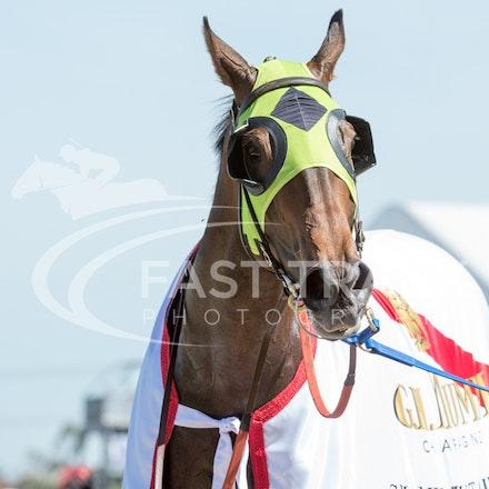 Race 6, Vain Queen_06-11-14, Flemington_Sharon Chapman, WIN_462
