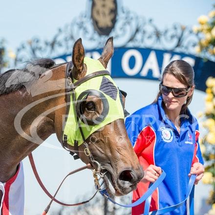Race 6, Vain Queen_06-11-14, Flemington_Sharon Chapman, WIN_463