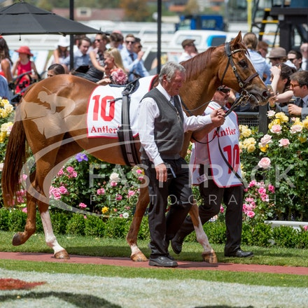 Race 3, London Stripe_08-11-14, Flemington_Sharon Chapman_171