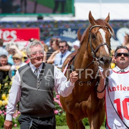 Race 3, London Stripe_08-11-14, Flemington_Sharon Chapman_174