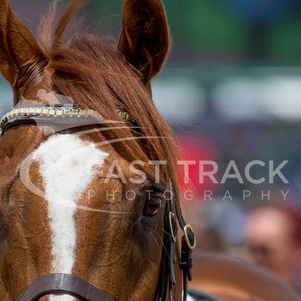 Race 3, London Stripe_08-11-14, Flemington_Sharon Chapman_176