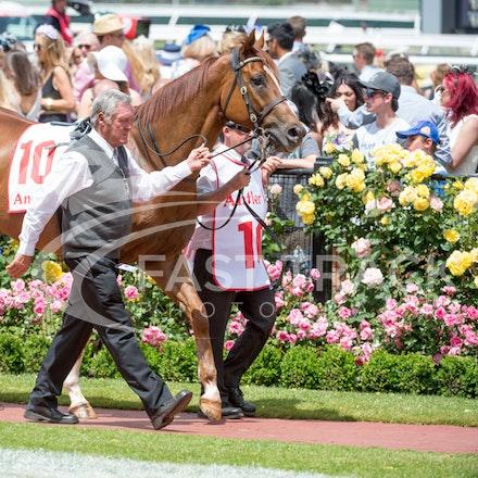 Race 3, London Stripe_08-11-14, Flemington_Sharon Chapman_182