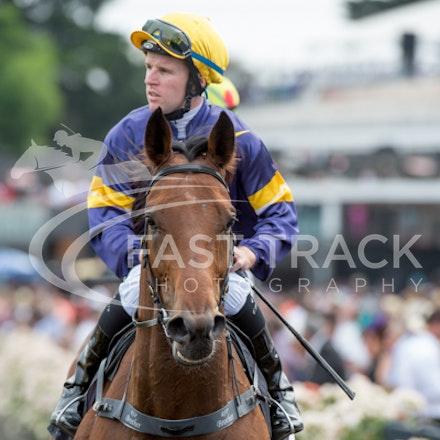 Race 5, Big Memory, Tommy Berry_08-11-14, Flemington_Sharon Chapman_399