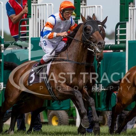 Race 5, Le Roi, Damien Oliver_08-11-14, Flemington_Sharon Chapman, WIN_337