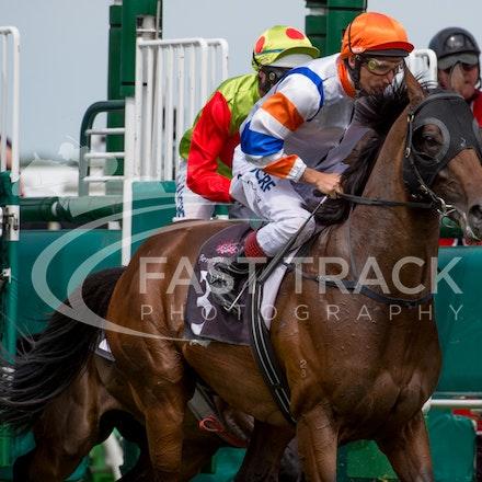 Race 5, Le Roi, Damien Oliver_08-11-14, Flemington_Sharon Chapman, WIN_338