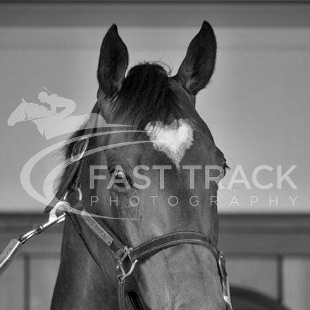 Race 6, Lankan Rupee, Stalls_08-11-14, Flemington_Sharon Chapman_239