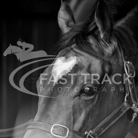 Race 6, Lankan Rupee, Stalls_08-11-14, Flemington_Sharon Chapman_241
