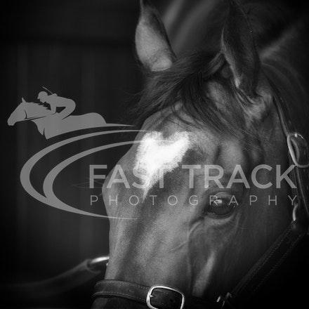 Race 6, Lankan Rupee, Stalls_08-11-14, Flemington_Sharon Chapman_243