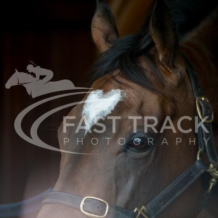 Race 6, Lankan Rupee, Stalls_08-11-14, Flemington_Sharon Chapman_242