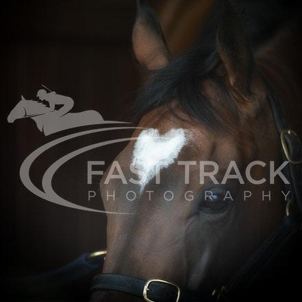 Race 6, Lankan Rupee, Stalls_08-11-14, Flemington_Sharon Chapman_244