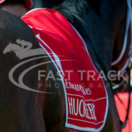 Race 7, Hucklebuck_08-11-14, Flemington_Sharon Chapman, WIN_643
