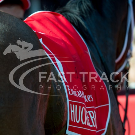 Race 7, Hucklebuck_08-11-14, Flemington_Sharon Chapman, WIN_644