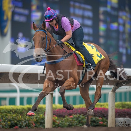 Hong Kong - Sha Tin Trackwork