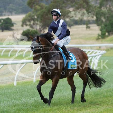 Race 1, King Henry, Michael Kent_01-01-15, Woolamai_0001