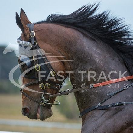 Race 1, King Henry, Michael Kent_01-01-15, Woolamai_0005