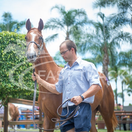 Magic Millions - Day Two - 8 January 2015