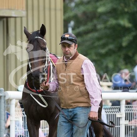 Race 1, Mayfair Mogul, Toby Lake_31-01-15, Healesville, Picnics, WIN_010