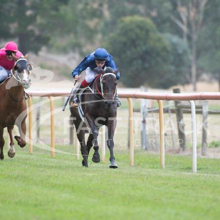 Race 1, Mayfair Mogul, Toby Lake_31-01-15, Healesville, Picnics, WIN_013