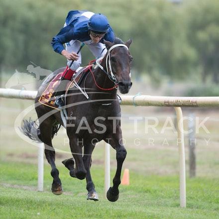 Race 1, Mayfair Mogul, Toby Lake_31-01-15, Healesville, Picnics, WIN_017