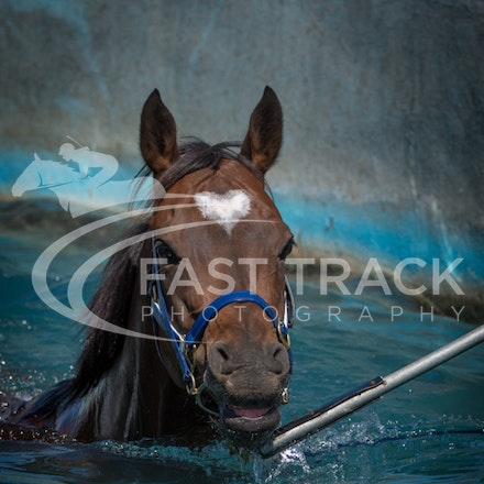 Caulfield Pool - 11 March 2015