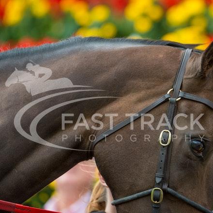 Race 1, Celtic Diamond_11-04-15, Royal Randwick_092