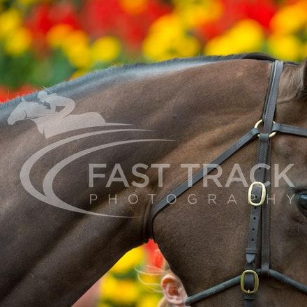 Race 1, Celtic Diamond_11-04-15, Royal Randwick_093