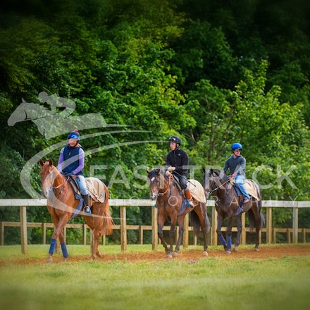 Newmarket Trackwork - United Kingdom