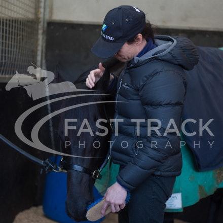 Flemington Trackwork, Brazen Beau & Justine Hales_29-05-15_0062