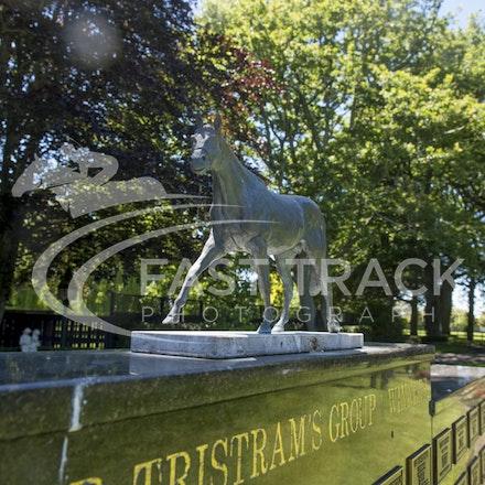 NZ Media Trip, Cambridge Stud, General_03-12-14, New Zealand_263