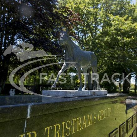 NZ Media Trip, Cambridge Stud, General_03-12-14, New Zealand_265