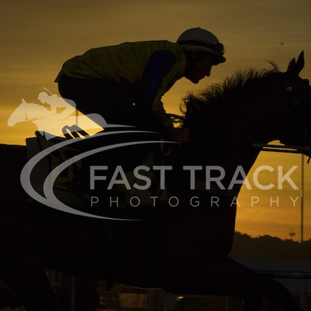 Moonee Valley, Amovatio, Damien Oliver_20-10-15_0079
