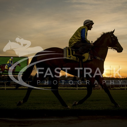 Moonee Valley, Amovatio, Damien Oliver_20-10-15_0080