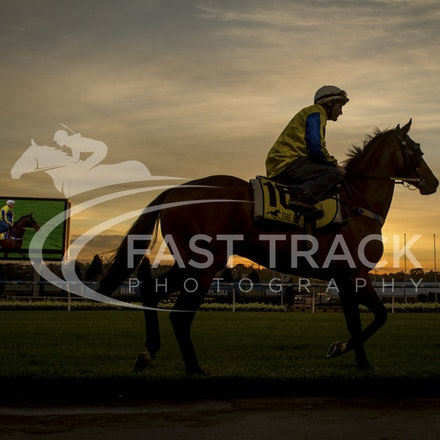 Moonee Valley, Amovatio, Damien Oliver_20-10-15_0056
