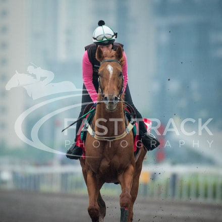 Hong Kong - Sha Tin Trackwork 2015