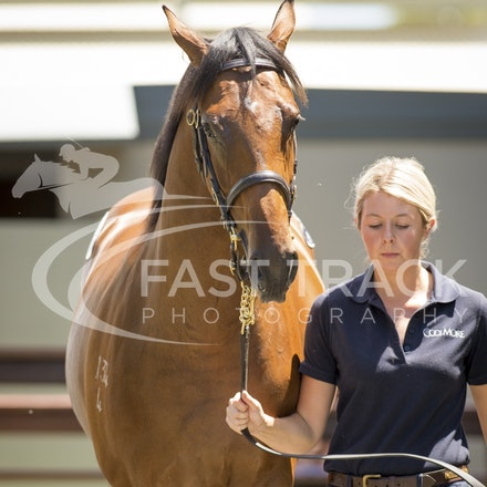 Lot 448, Pierro x Monsoon Wedding, Filly, Coolmore_08-01-16, Day Three, MM_0325